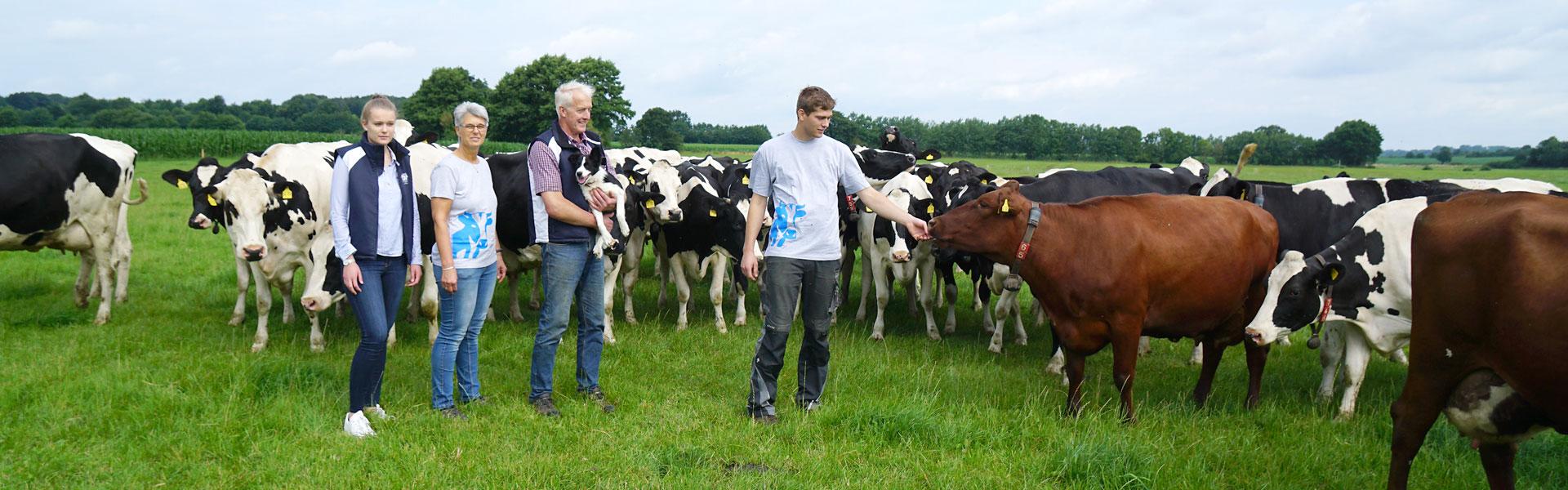 Personen und Kühe auf der Weide